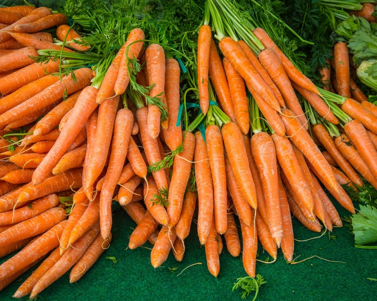 Выведена устойчивая к засолению морковь