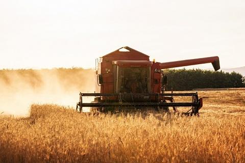 Прогнозы урожая зерна вновь повышены