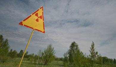 Обнаружен механизм выживания растений вЧернобыле
