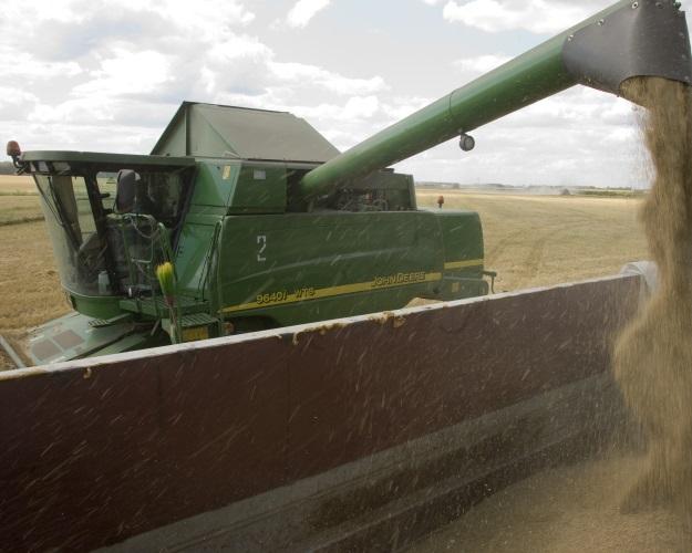 Кубань иКрым рассчитывают наурожай зерна нениже прошлогоднего