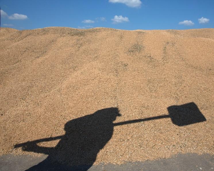Экспортные цены напшеницу выросли впервые завосемь недель