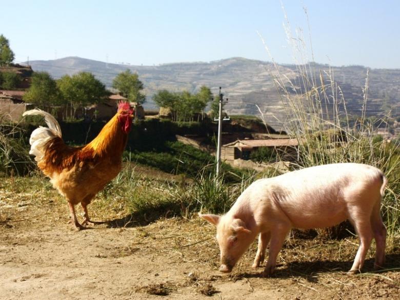 Удвоение по птице и свинине