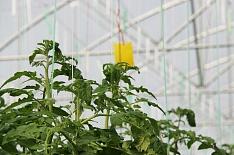 «Эко-культура» загод вложила втепличные комплексы почти 20 млрд рублей