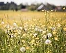ВРоссии появится реестр сельхозземель
