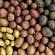 ВВоронежской области много картофеля