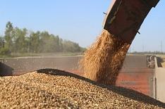 В Крыму могут запретить вывоз зерна