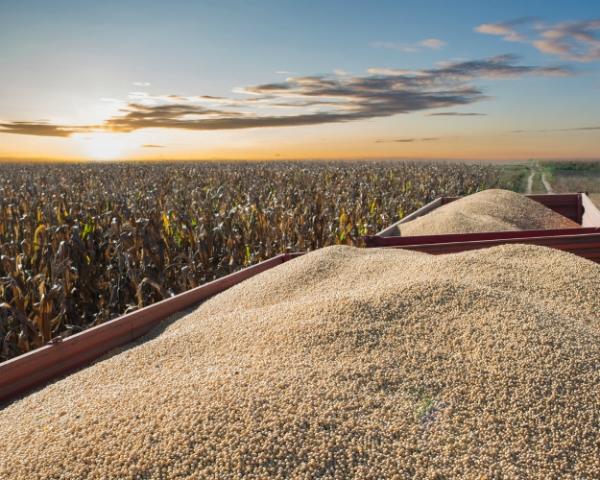 РФ экспортировала практически 17 млн тонн зерна втекущем сезоне
