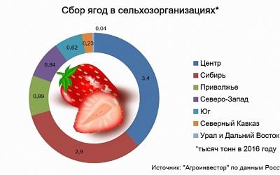 Производство ягод за2016 год увеличилось на6%