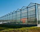 К началу 2017 года площадь теплиц в стране достигнет 2,3 тысячи гектаров