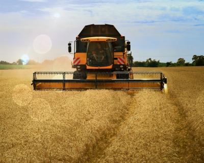 Глобальный рынок зерна будет стабильным