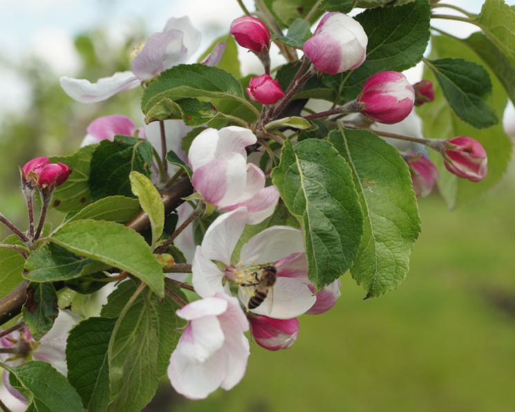 Жизнь без пестицидов. Технологии органического земледелия эффективны в долгосрочной перспективе