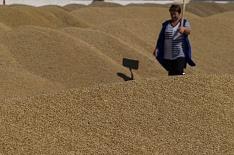 Урожай зерна в 2019 году может составить 120 млн тонн