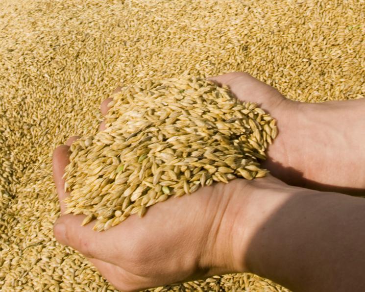 Экспорт зерна на35% превысил прошлый год