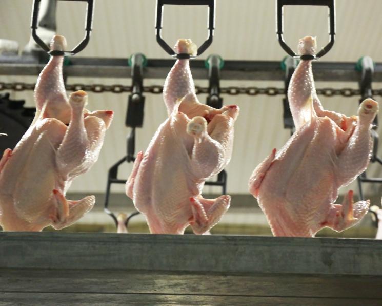 Группа «Ресурс» начала экспорт мяса птицы с использованием железной дороги