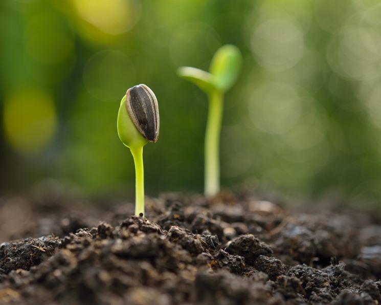 Устойчивая семечка. Агрокомпании в поисках эффективных способов защиты подсолнечника