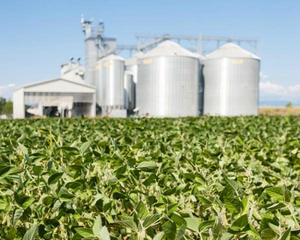 «Соевые протеиновые продукты» планирует построить завод по глубокой переработке сои в Ставропольском крае