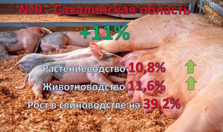 9. Сахалинская область