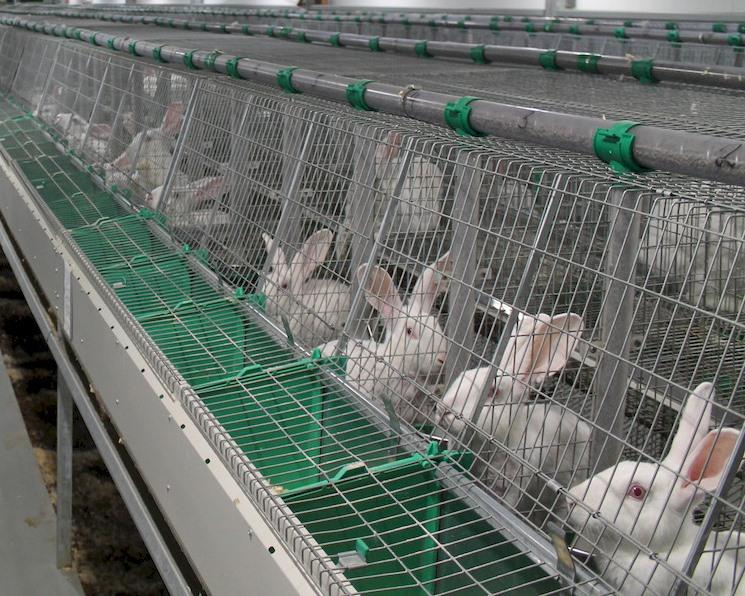 Производство крольчатины вырастет в шесть раз