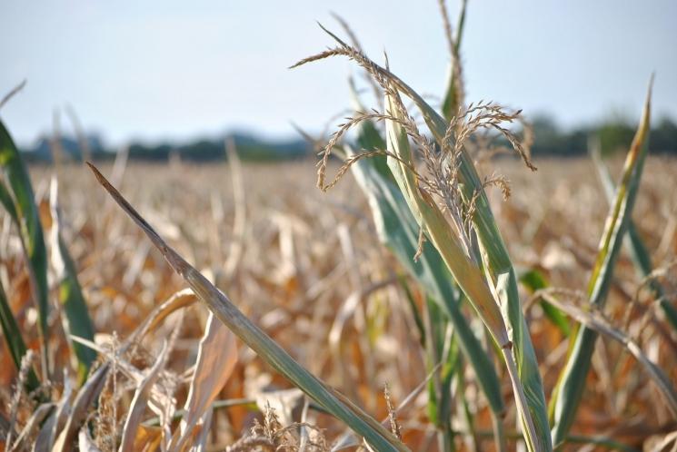 Минсельхоз повысил оценку ущерба аграриев отЧС до 11,6 млрд рублей