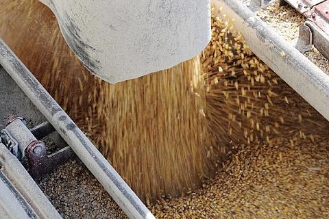Экспорт зерна может составить 46 млн тонн