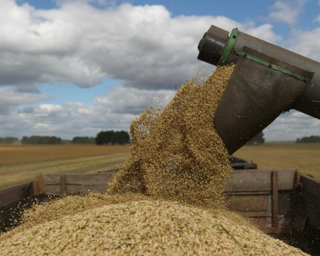 Специалист: Рекордный урожай может привести к«ценовой катастрофе» нарынке зерновых
