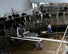 Реализация молока вПодмосковье сократилась на5,5%