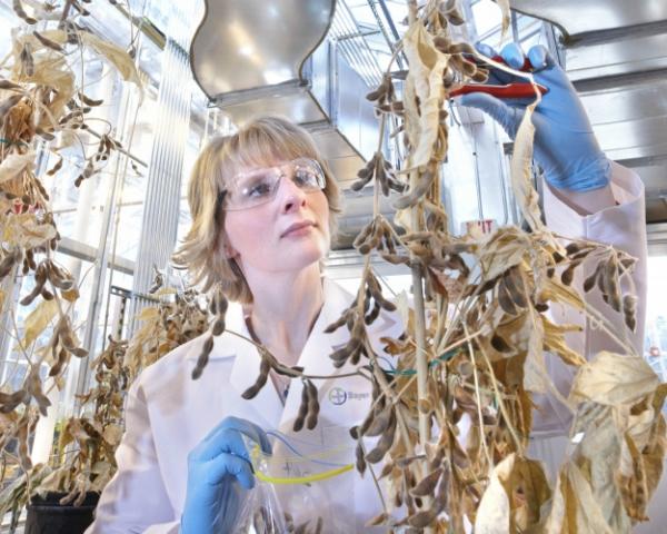Главное событие, сентябрь 2016: Bayer купил Monsanto