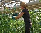 РГАЗУ борется снитратными овощами