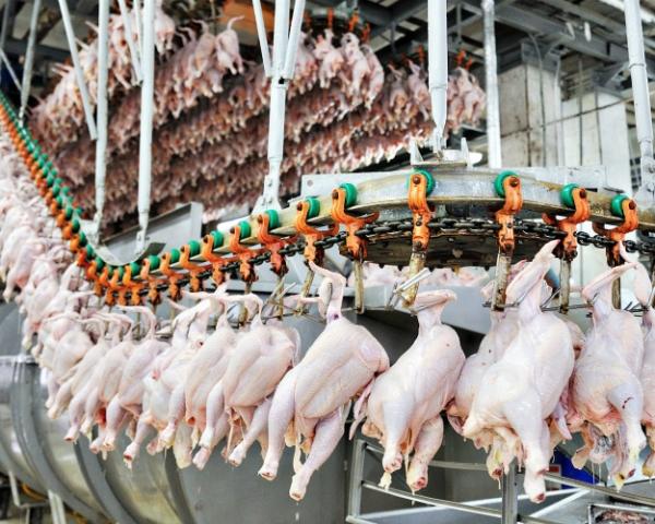 Производство мяса птицы продолжит расти