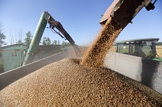 Минсельхоз прогнозирует урожай зерна впределах 100 млн тонн