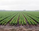 «Содружество» возьмет в аренду 100 тыс. гектаров в Приамурье
