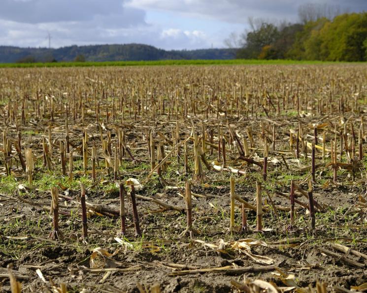 Сельхозпроизводство упало на2,5% воктябре