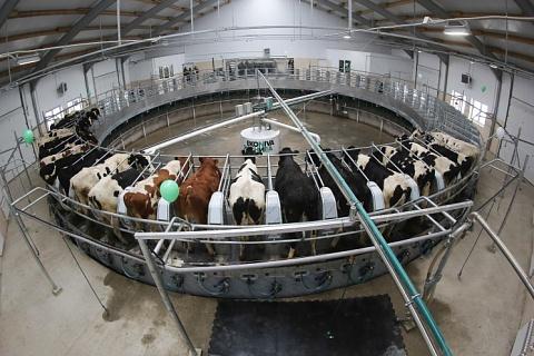 «ЭкоНива» через год намерена стать крупнейшим производителем молока в мире