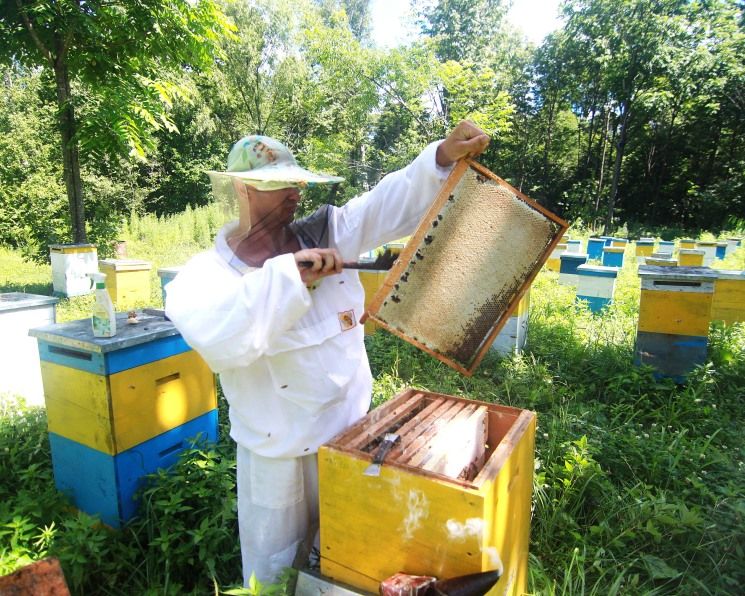 Пчёлы под угрозой. Вырубка лесов и безответственное применение СЗР наносят урон пчеловодам