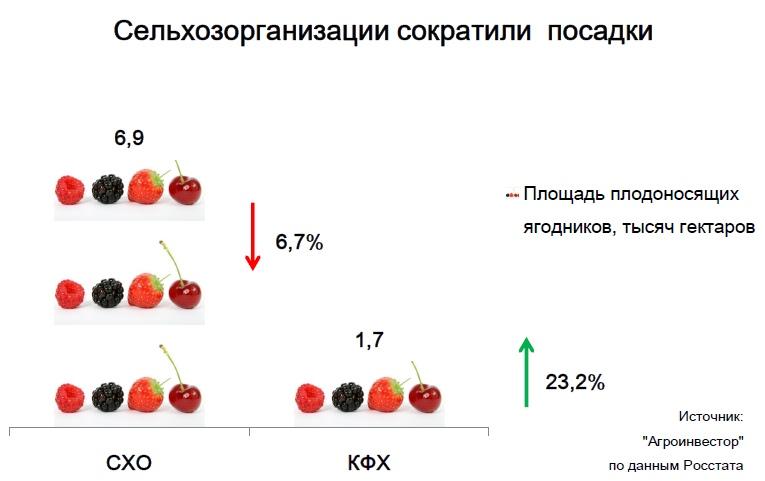 Площадь ягодников