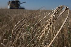 Урожайность пшеницы— на трехлетнем минимуме