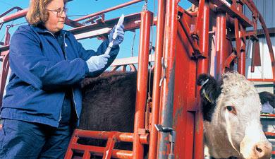 Ветеринарная угроза инвестициям