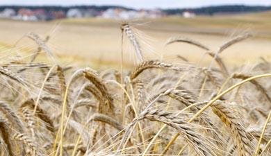Зерновые интервенции начнутся 4апреля