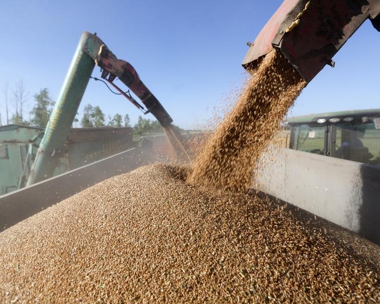 Зерно из страны будет вывозиться по квоте