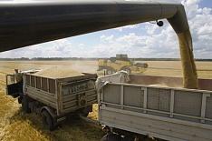 Минэкономразвития спрогнозировало урожай зерна в 2024 году