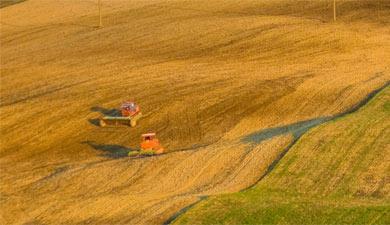 Сельхозорганизации на1августа снизили сбор зерна на10%