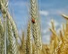 Союз зернопроизводителей просит субсидировать органическое производство