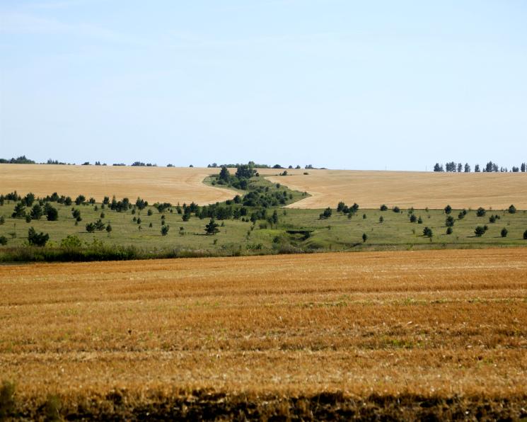 «Продимекс» продолжает расширять земельный банк