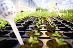 «Технологии тепличного роста» в этом году запустят комплекс под Тамбовом