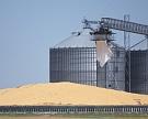 Стартовые цены нановый урожай пшеницы могут быть науровнях $170−173 затонну