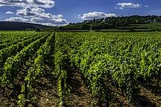«Абрау-Дюрсо» купила 850 гектаров под виноградники