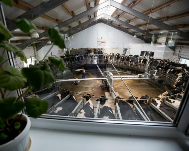 Сельхозорганизации увеличили производство молока