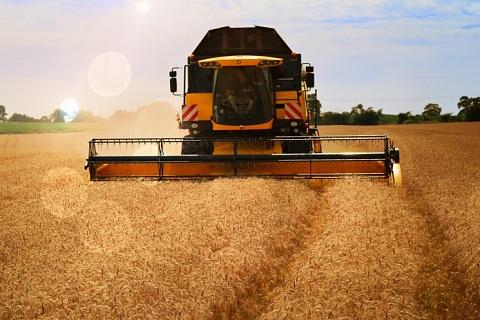 Минсельхоз понизил прогноз урожая зерна