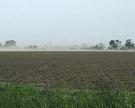 Курская область увеличила посевы сахарной свёклы