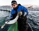 Россельхознадзор выявил канал контрабанды рыбы
